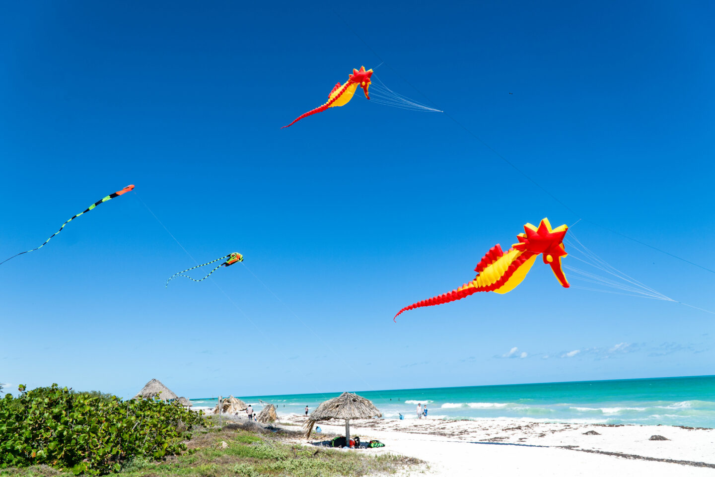 Kites flying over the beach in El Cuyo. El Cuyo comprises part of the Rio Lagartos Reserve with approximately 18,000 species of birds.