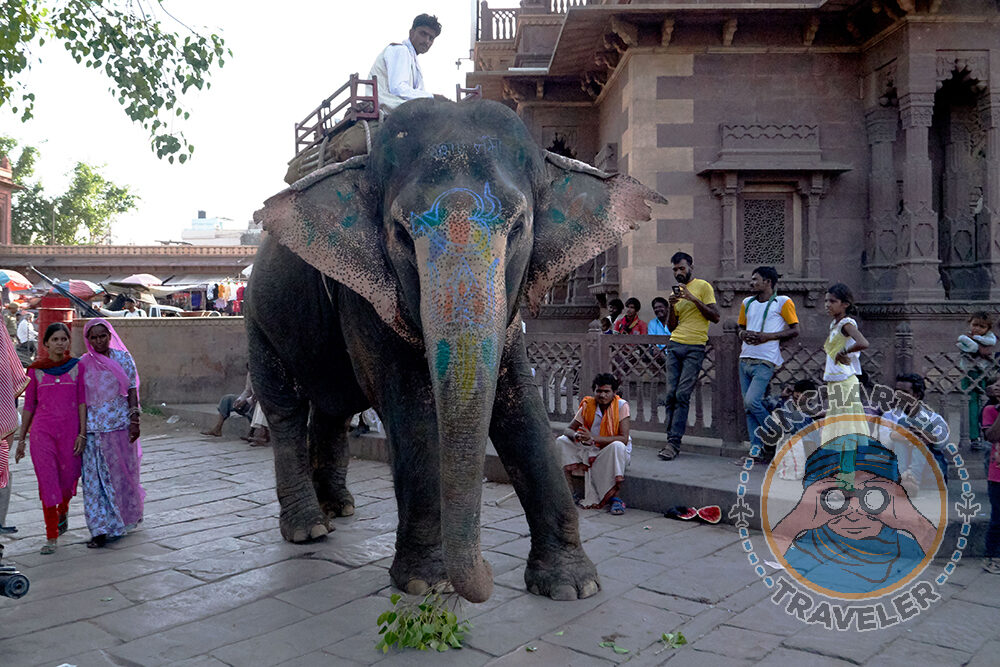 Painted elephant and his handler near the clock tower in Jodhpur. This is a major roadway with active traffic. But motorists just drove around him as if this was normal.